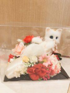商品一覧 羊毛フェルト トーシューズ猫